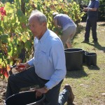Image for Picking grapes and making wine