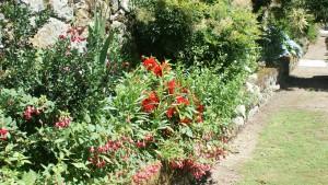 More colour in the garden