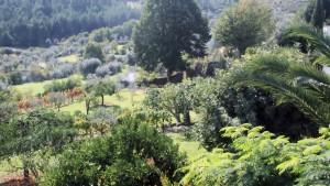 Pruning view 1